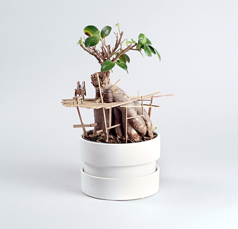 edediah-corwyn-voltz-somewhere-small-succulent-and-cacti-treehouses-design
